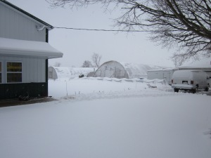 greenhouses to the right, store to the left....and lots of snow in between