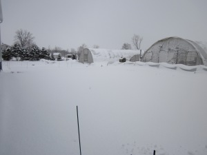 yeah....all that white stuff you see? That's spring....just doesn't look like it.