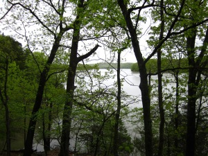 View of part of the Lake from one of the trails...